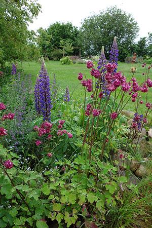 Gartenzeit.Claußnitzer | planen | pflanzen | pflegen |